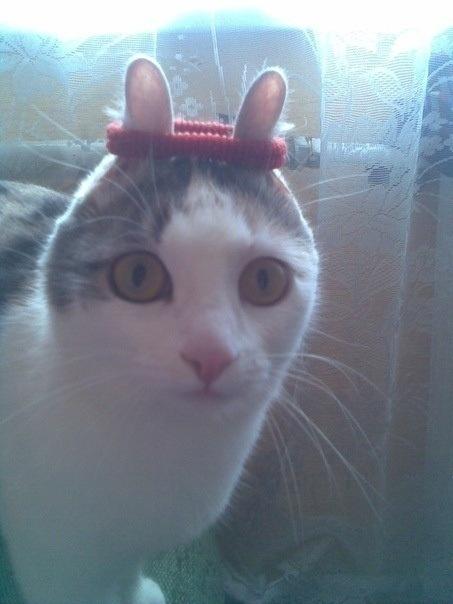ВКонтакте проводит конкурс-тендер на создание смайлов фото f_4f036d65f0a9d.jpg