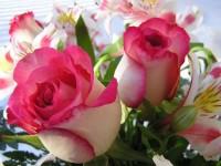 Доставка и оплата цветов