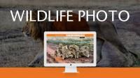 Дизайн сайта фотографа дикой природы