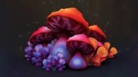 Mushrooms Грибы