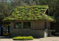Сады на крыше вместо битума