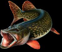Gif баннер. Рыбацкая тематика. Трофейная рыбалка