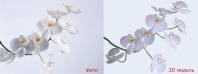 Орхидея модель и визуализация