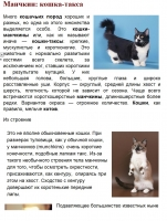 Манчкин: кошка-такса