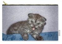 пенал - котёнок