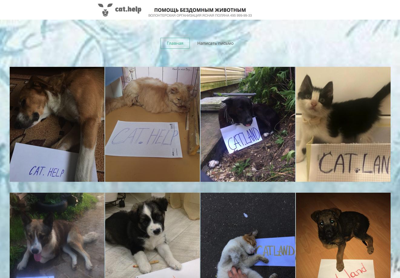 логотип для сайта и группы вк - cat.help фото f_10359daa18ad5e0b.jpg