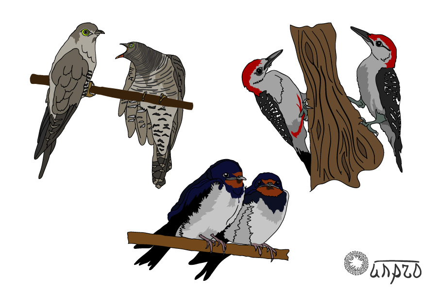 Зверушки: птички лесные