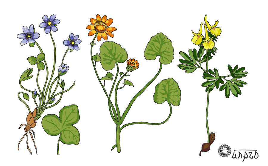 Раз гербарий