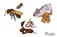 Зверушки: пчелозайцы
