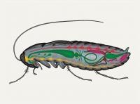Мультимедиа-зоология: таракан