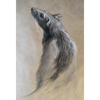 эскиз крысы