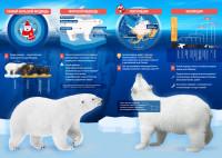 Инфографика Белый Мишка