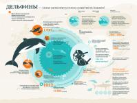 инфографика Дельфины