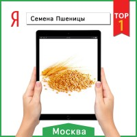 Продвижение сайта tsk-terra.ru