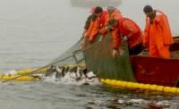 Бизнес-план «Добыча тихоокеанских лососей и сайры»