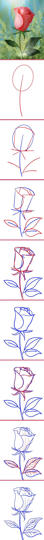 """Роза. Рисунки к урокам  из серии """"Как нарисовать..."""""""