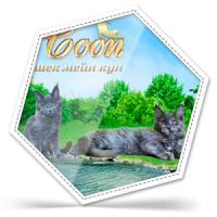 Сайт питомника кошек Mister Coon