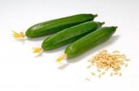 Семена огурцов почтой (СЕО)
