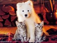 Биодобавки для домашних животных СЕО