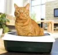 Как приучить кота не разбрасывать наполнитель :)
