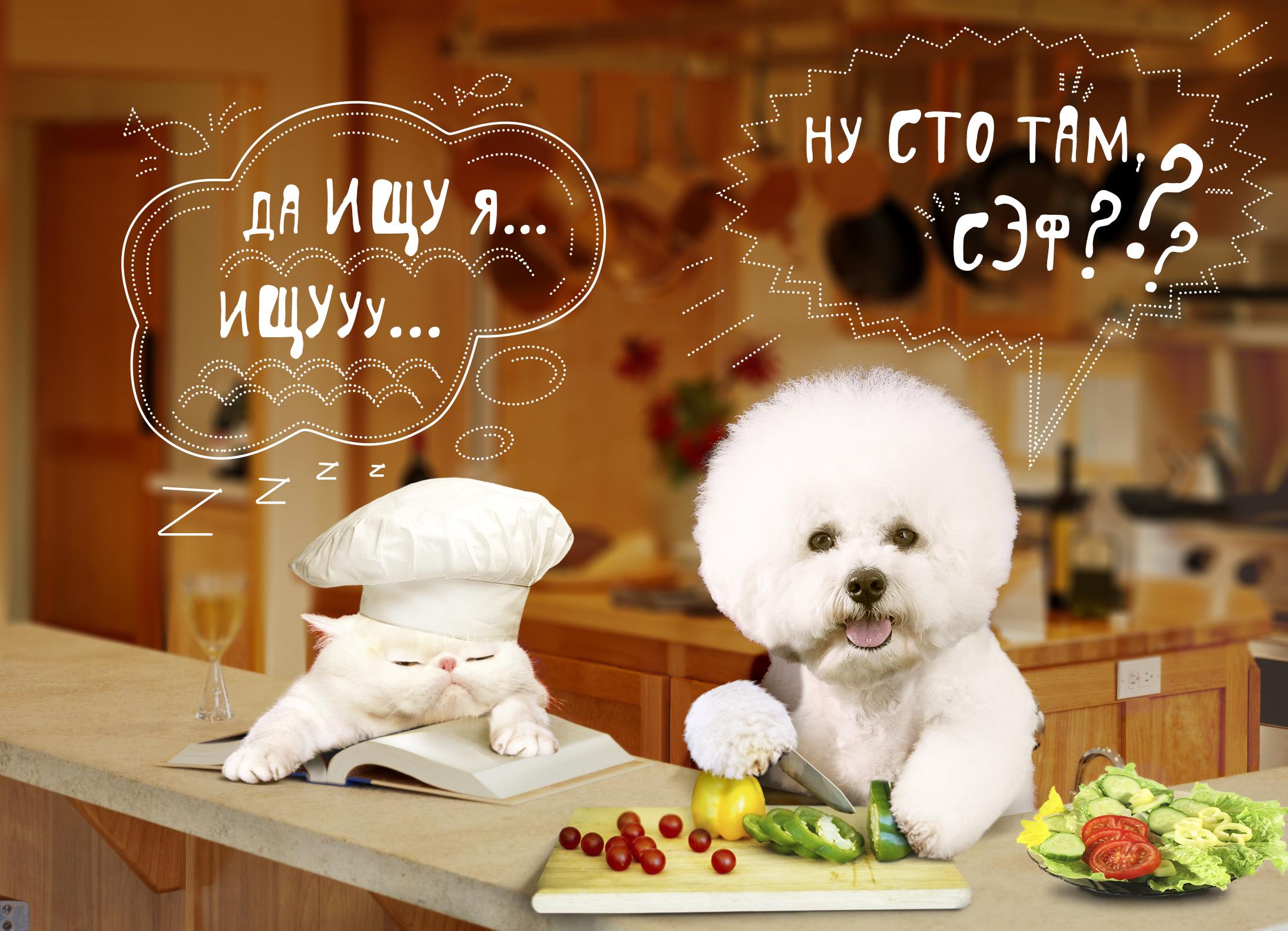 Создать интересный коллаж с участием животных фото f_00151defa027ab47.jpg